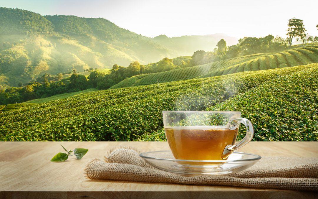 中華文化最美的底蘊-茶